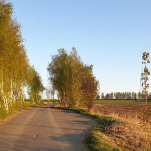 Straße zum Steinbruch Oberschöna