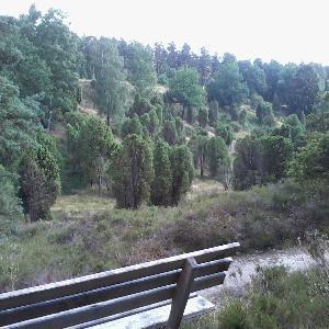 Borstel, super Weitsicht und alte Bäume, seh ruhig