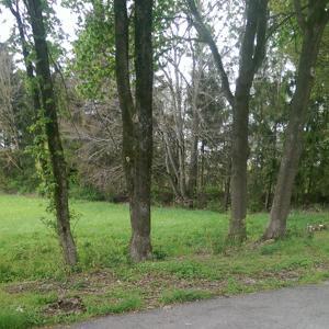 Netter Parkplatz mit Wald
