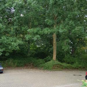Constantia Parkplatzsex Hochschule Emden-Leer