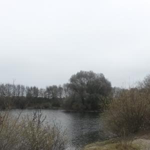 Rammingen am Baggersee