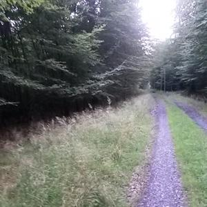 Im Wald hinter möhnesee südufer