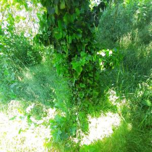Bornbruchsee nähe A5 bei Mörfelden
