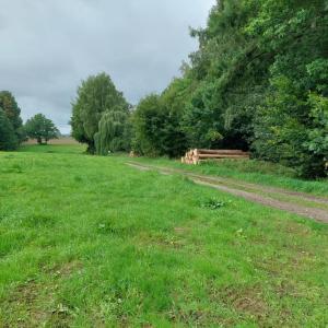 Wald zwischen Ebersbach und Kottmarsdorf