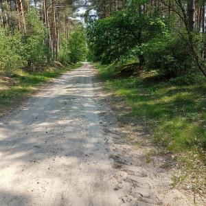 Heidefläche in Reddingen
