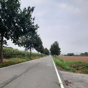 Straße zur Fähre Grossenwieden