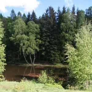 Werdauer Wald - Elferteich